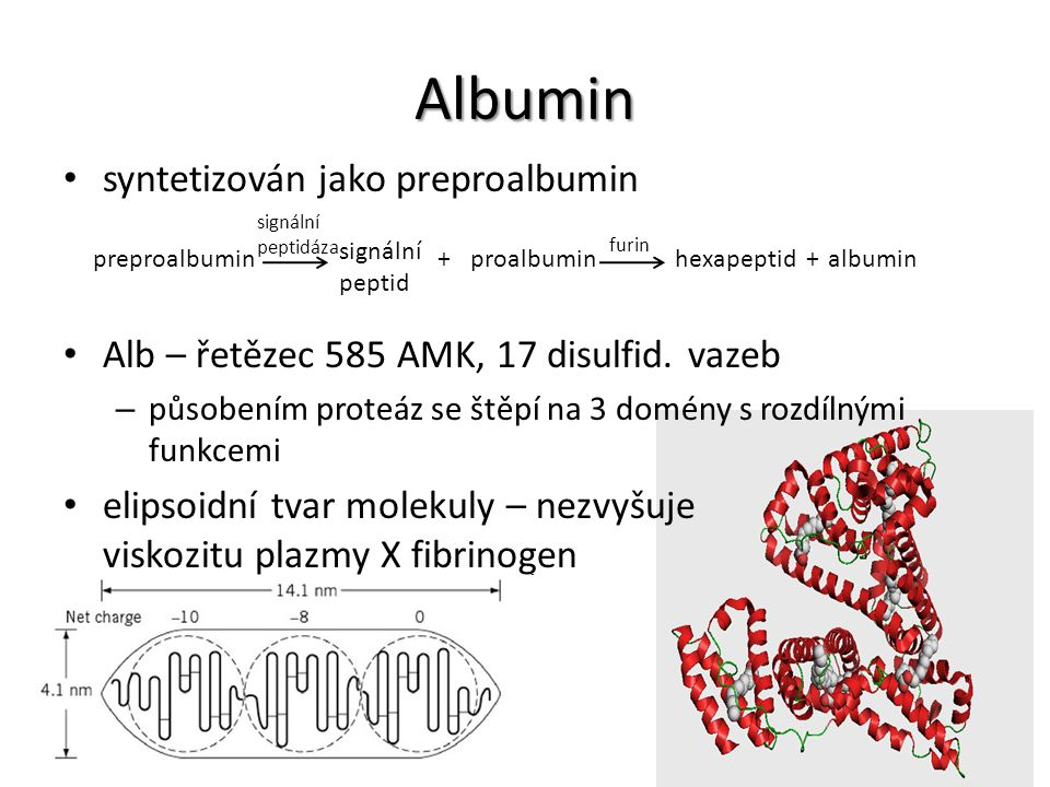 Albumin syntetizován jako preproalbumin