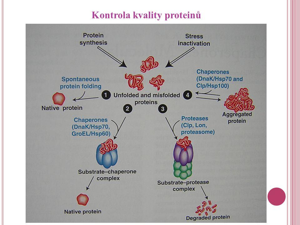 Kontrola kvality proteinů