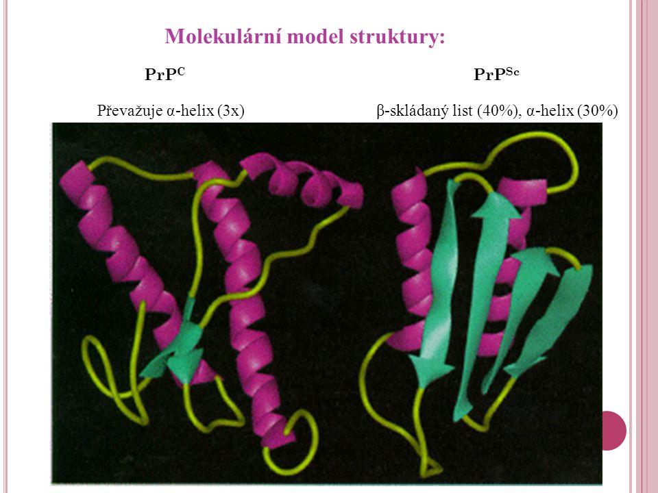Molekulární model struktury: