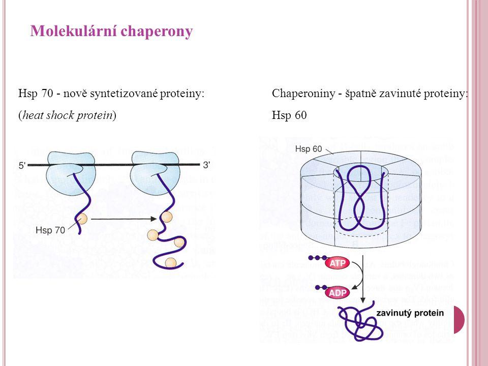 Molekulární chaperony