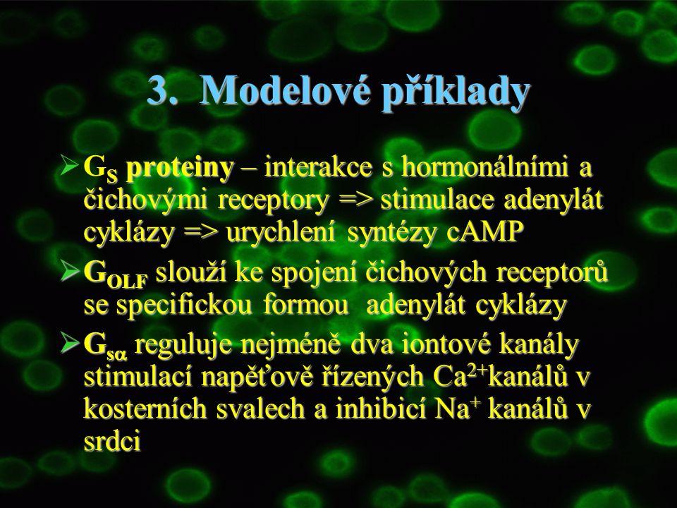 3. Modelové příklady GS proteiny – interakce s hormonálními a čichovými receptory => stimulace adenylát cyklázy => urychlení syntézy cAMP.