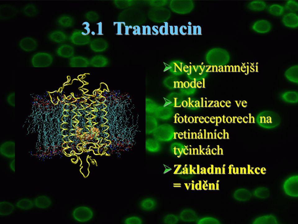 3.1 Transducin Nejvýznamnější model
