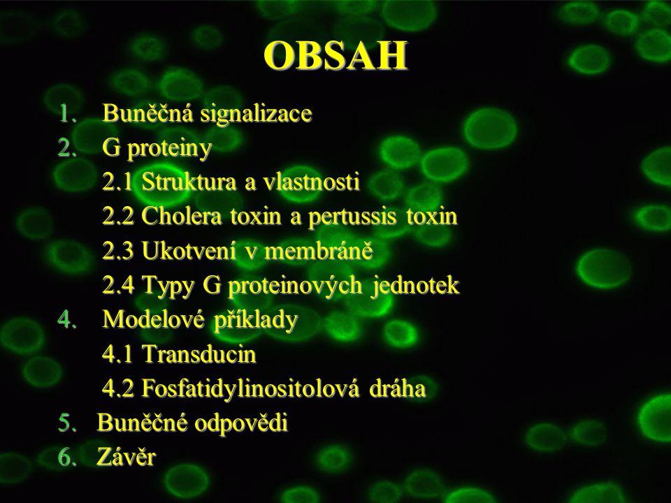 OBSAH Buněčná signalizace G proteiny 2.1 Struktura a vlastnosti