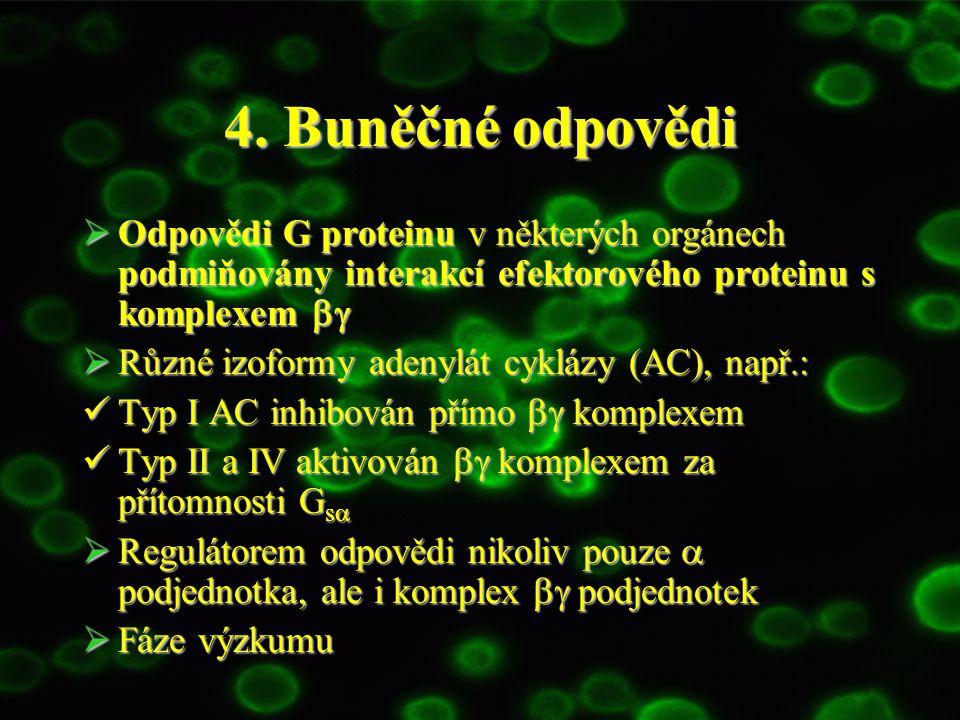 4. Buněčné odpovědi Odpovědi G proteinu v některých orgánech podmiňovány interakcí efektorového proteinu s komplexem bg.