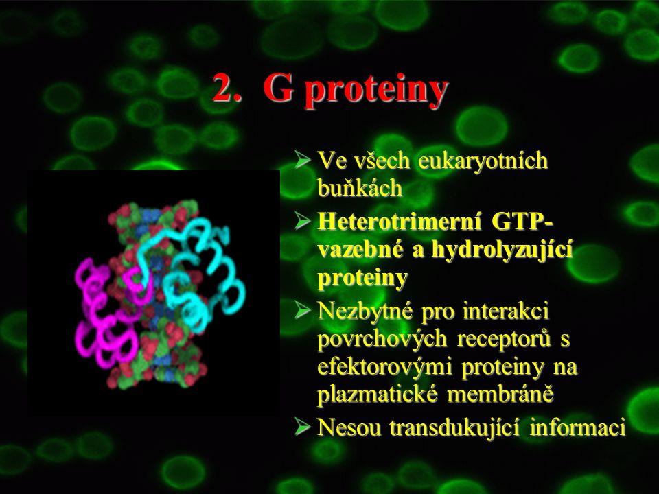 2. G proteiny Ve všech eukaryotních buňkách
