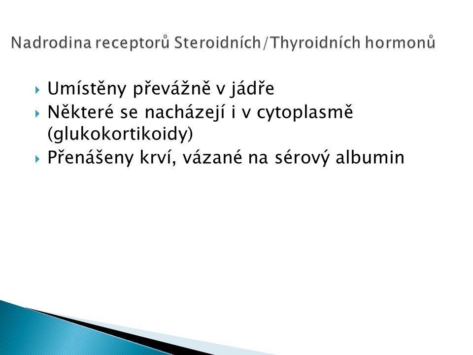 Nadrodina receptorů Steroidních/Thyroidních hormonů