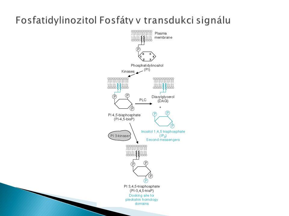 Fosfatidylinozitol Fosfáty v transdukci signálu