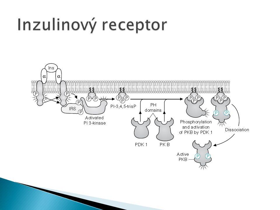 Inzulinový receptor