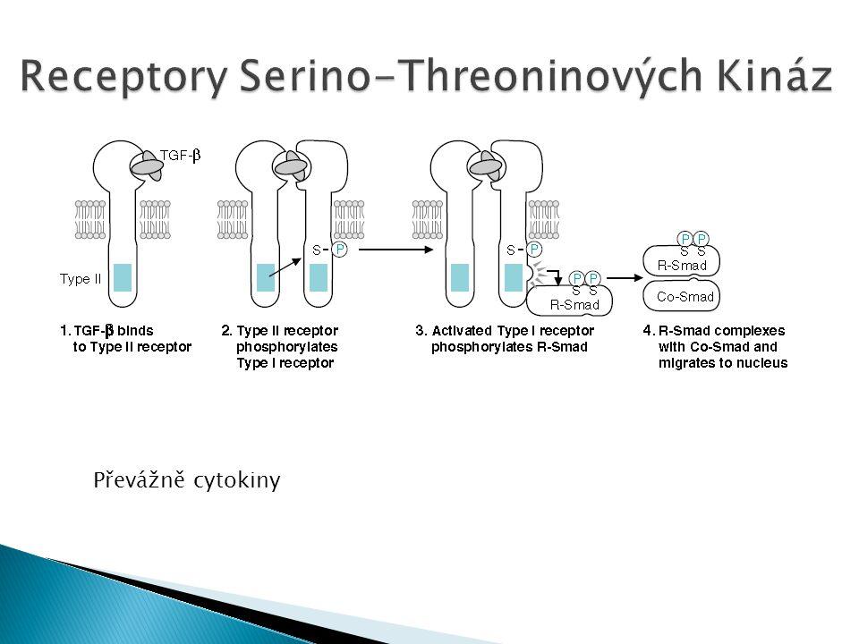 Receptory Serino-Threoninových Kináz