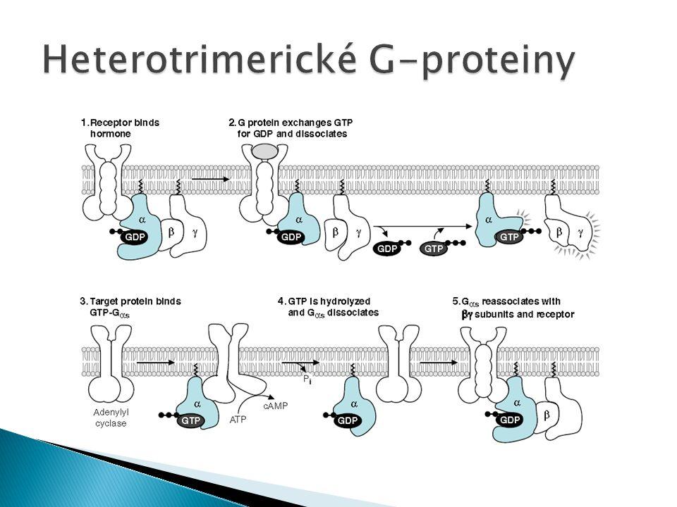 Heterotrimerické G-proteiny