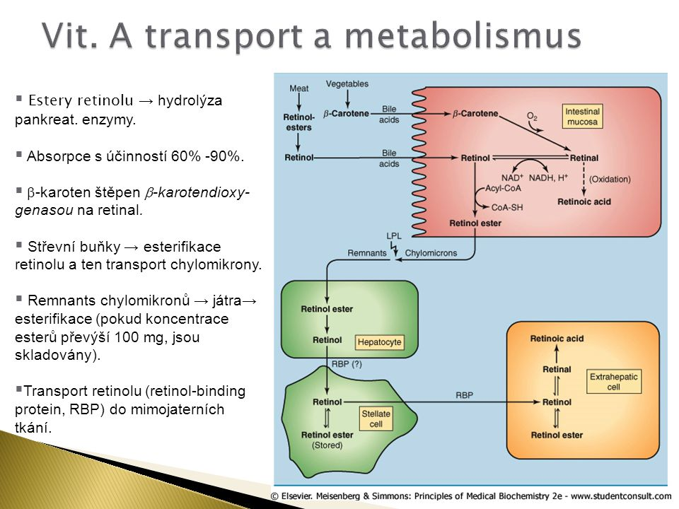 Vit. A transport a metabolismus
