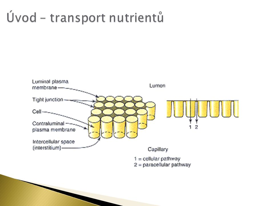 Úvod – transport nutrientů