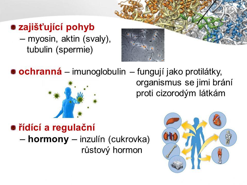 ochranná – imunoglobulin – fungují jako protilátky,