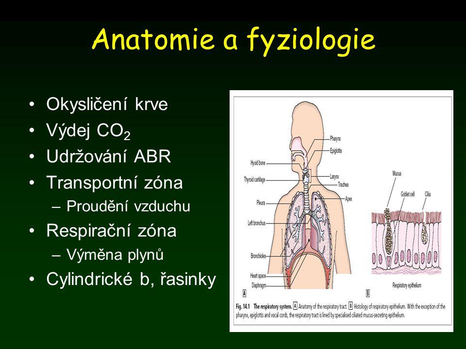 Anatomie a fyziologie Okysličení krve Výdej CO2 Udržování ABR