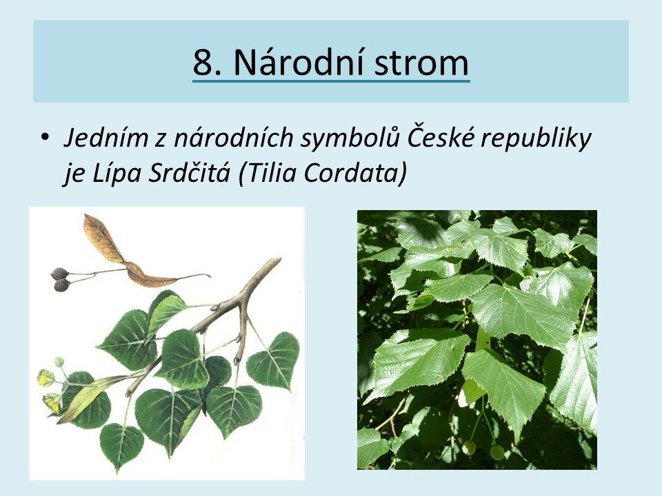 8. Národní strom Jedním z národních symbolů České republiky je Lípa Srdčitá (Tilia Cordata)