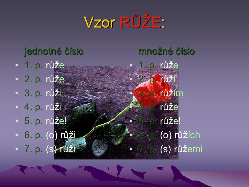 Vzor RŮŽE: jednotné číslo 1. p. růže 2. p. růže 3. p. růži 4. p. růži