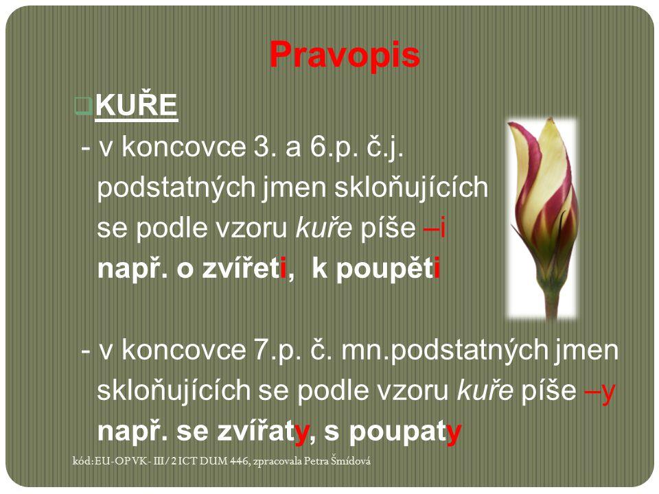 Pravopis KUŘE - v koncovce 3. a 6.p. č.j.