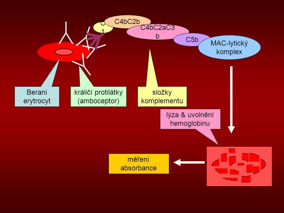králičí protilátky (amboceptor) složky komplementu
