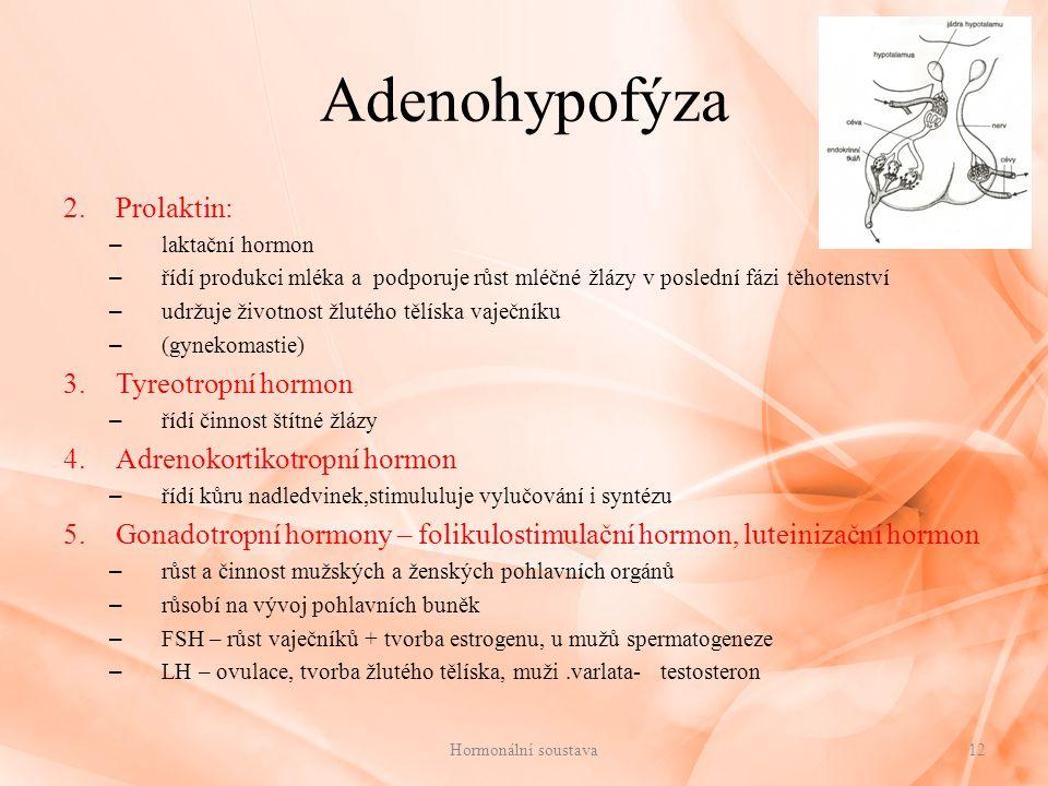 Adenohypofýza Prolaktin: Tyreotropní hormon Adrenokortikotropní hormon