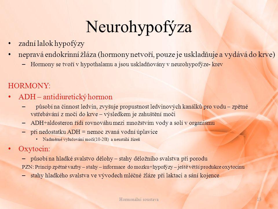 Neurohypofýza zadní lalok hypofýzy