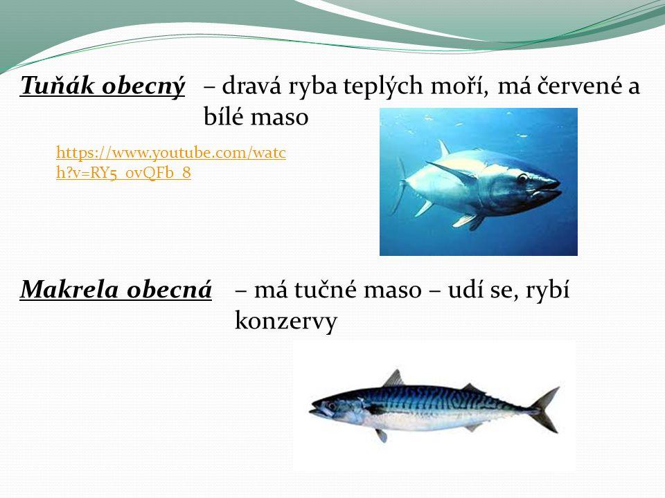 – dravá ryba teplých moří, má červené a bílé maso