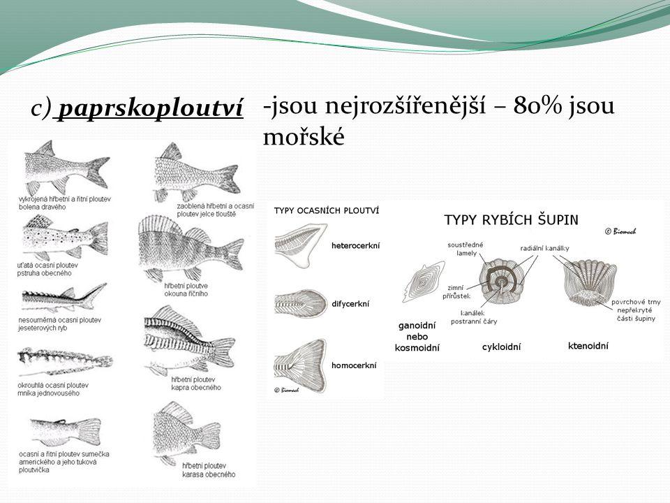 c) paprskoploutví -jsou nejrozšířenější – 80% jsou mořské