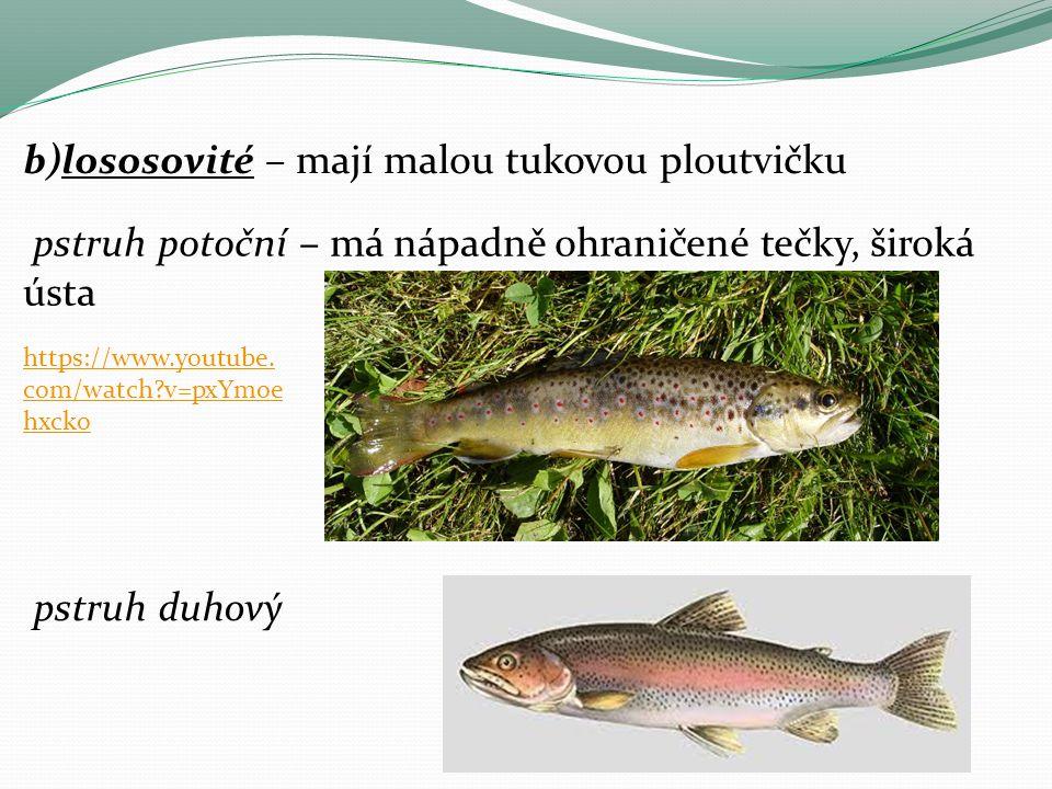 b)lososovité – mají malou tukovou ploutvičku