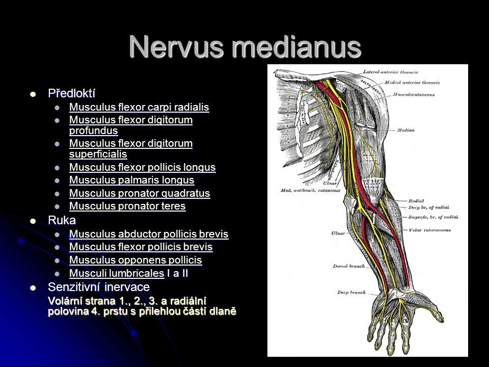 Nervus medianus Předloktí Ruka Senzitivní inervace