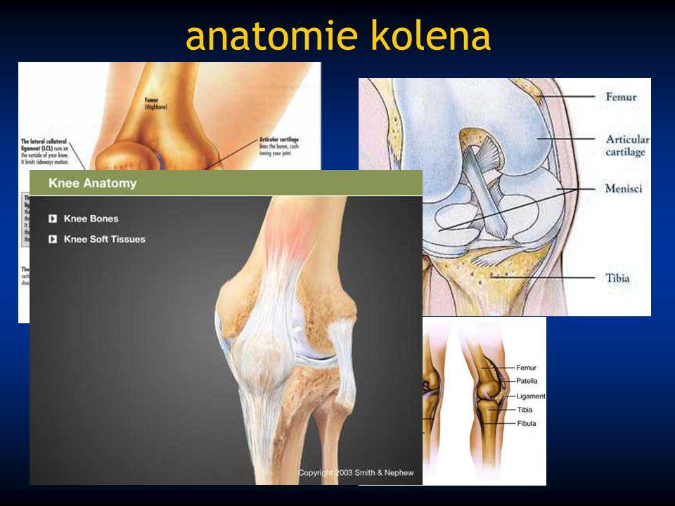 anatomie kolena