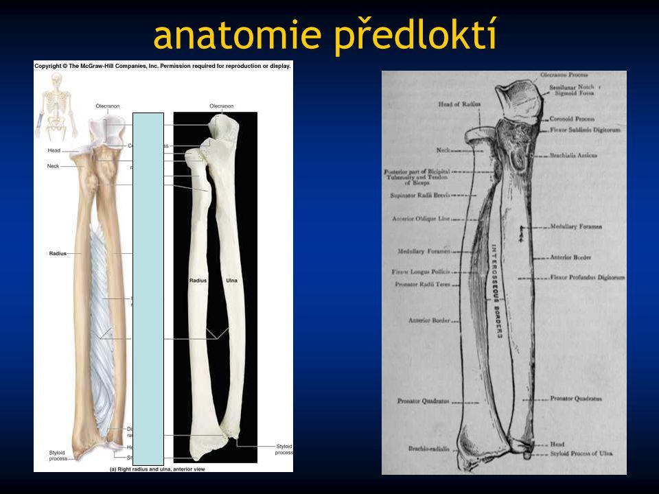 anatomie předloktí