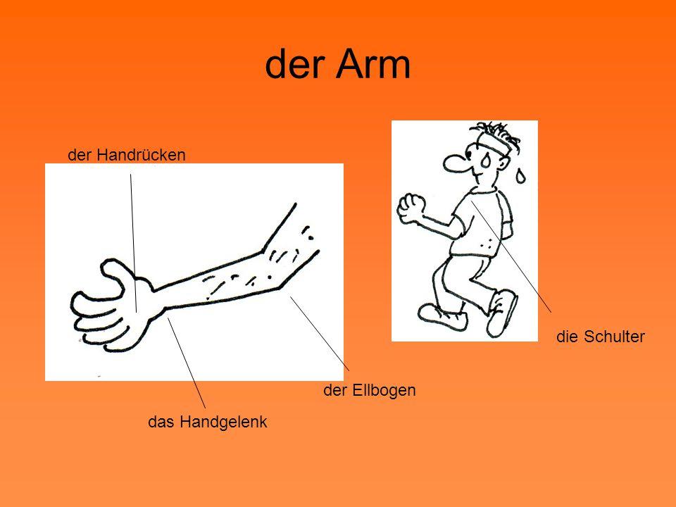 der Arm der Handrücken die Schulter der Ellbogen das Handgelenk