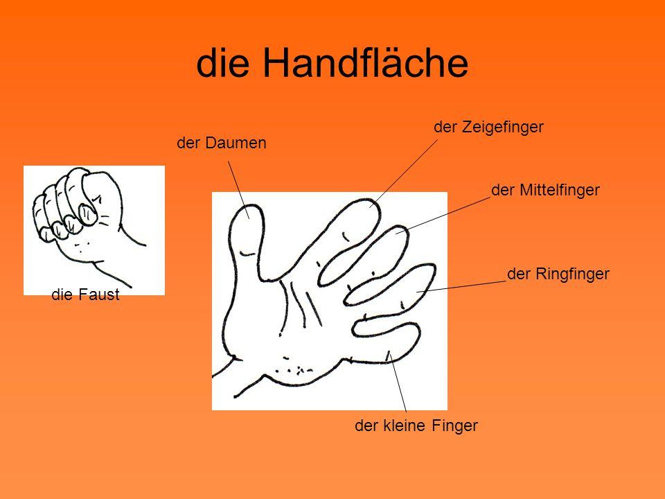 die Handfläche der Zeigefinger der Daumen der Mittelfinger