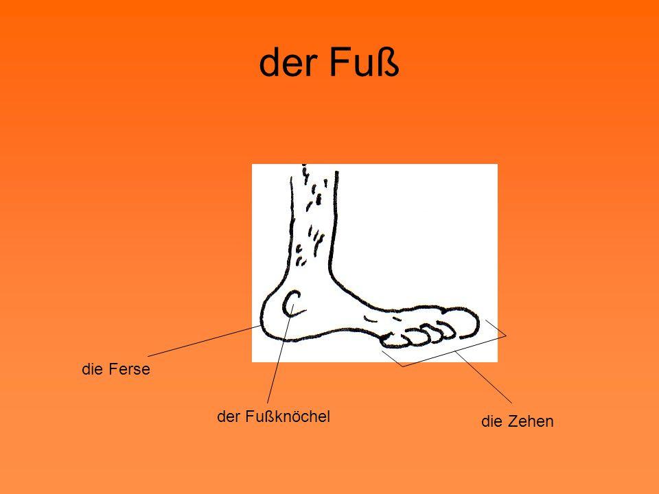 der Fuß die Ferse der Fußknöchel die Zehen