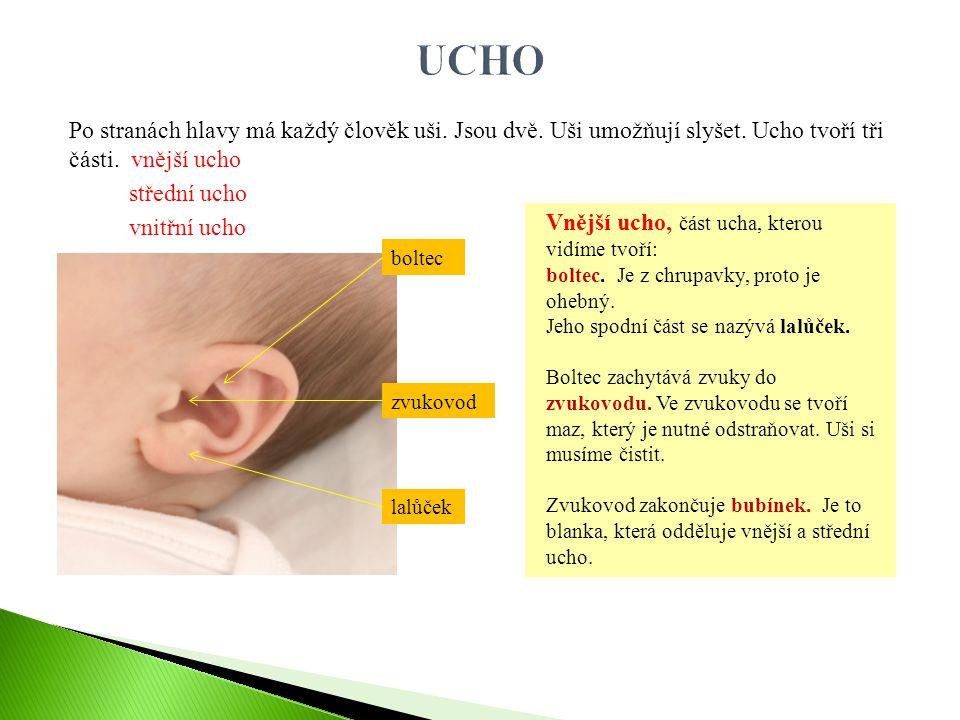 UCHO Po stranách hlavy má každý člověk uši. Jsou dvě. Uši umožňují slyšet. Ucho tvoří tři části. vnější ucho střední ucho vnitřní ucho
