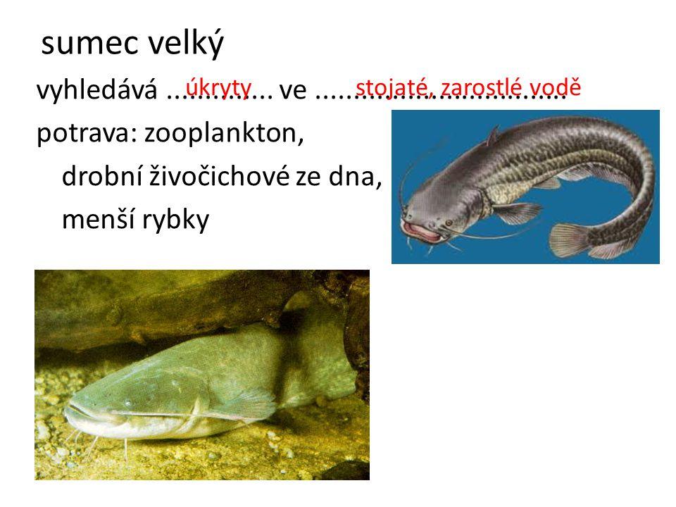 sumec velký vyhledává .............. ve ................................. potrava: zooplankton, drobní živočichové ze dna,