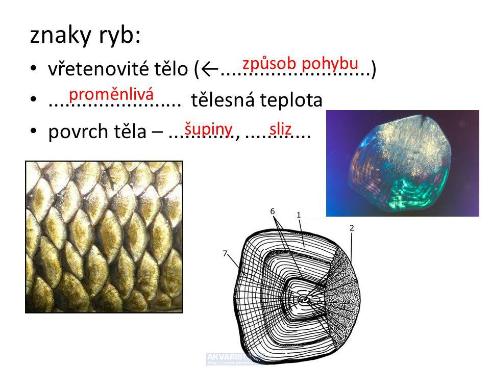 znaky ryb: vřetenovité tělo (←...........................)