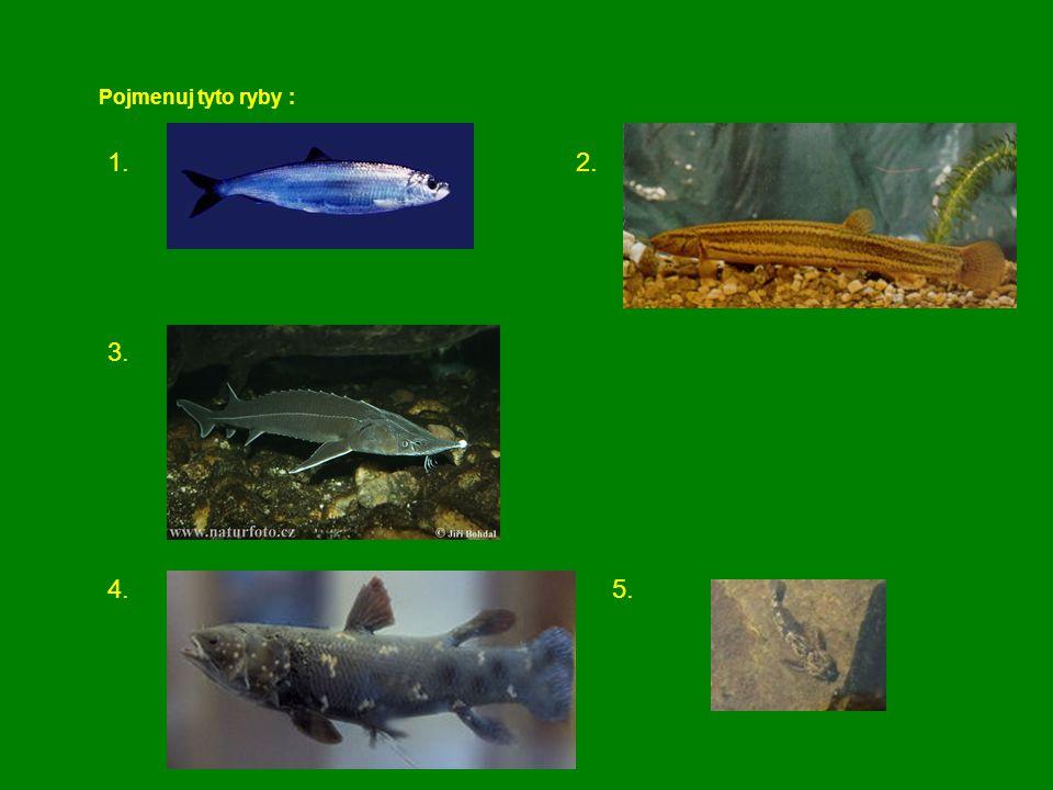 Pojmenuj tyto ryby : 1. 2. 3.