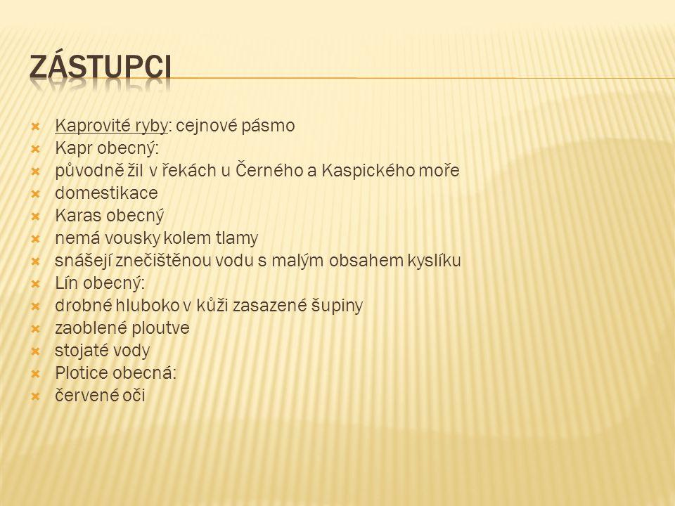 ZÁSTUPCI Kaprovité ryby: cejnové pásmo Kapr obecný: