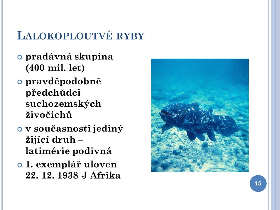 Lalokoploutvé ryby pradávná skupina (400 mil. let)