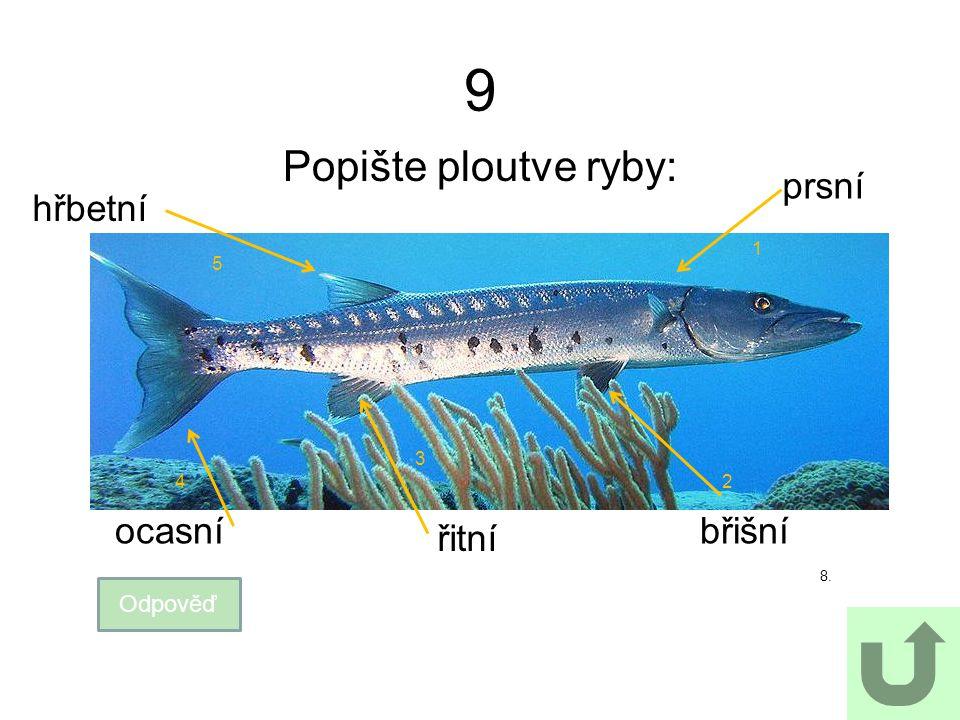 9 Popište ploutve ryby: prsní hřbetní ocasní břišní řitní Odpověď 1 5