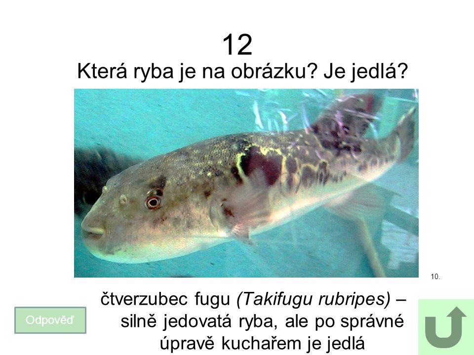 Která ryba je na obrázku Je jedlá