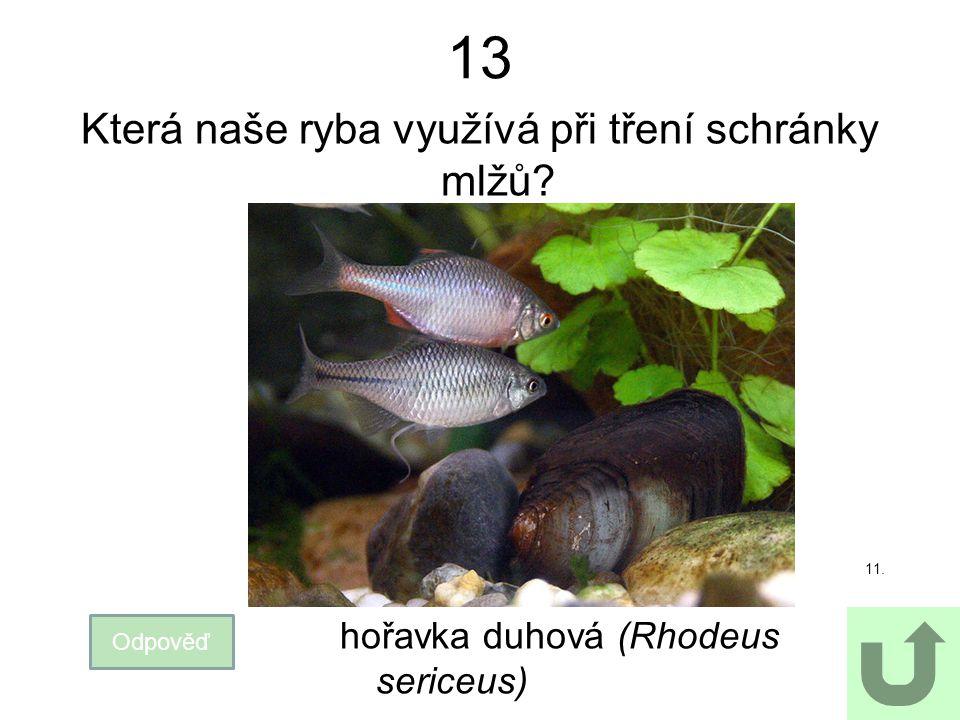 Která naše ryba využívá při tření schránky mlžů