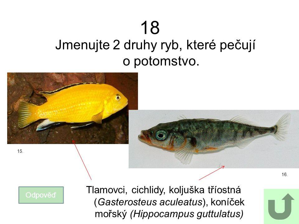 Jmenujte 2 druhy ryb, které pečují o potomstvo.