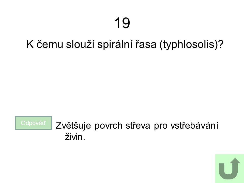 K čemu slouží spirální řasa (typhlosolis)