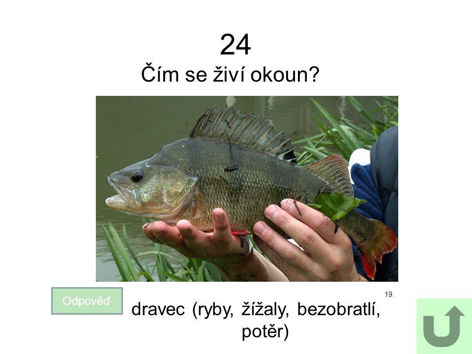 dravec (ryby, žížaly, bezobratlí, potěr)