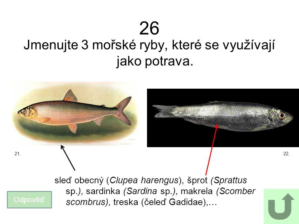 Jmenujte 3 mořské ryby, které se využívají jako potrava.