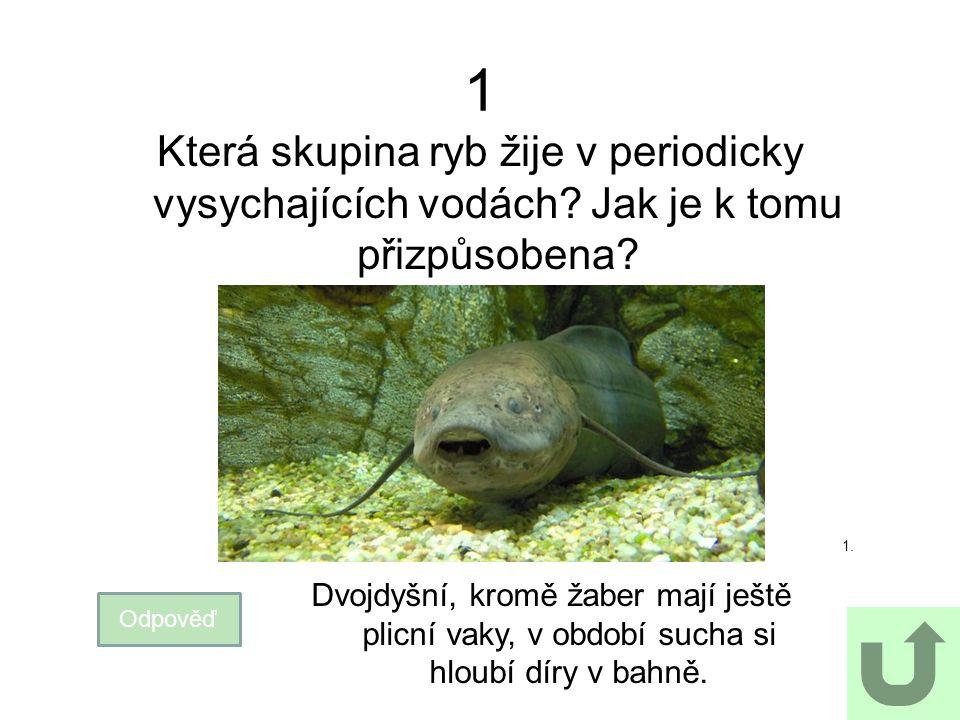 1 Která skupina ryb žije v periodicky vysychajících vodách Jak je k tomu přizpůsobena 1.