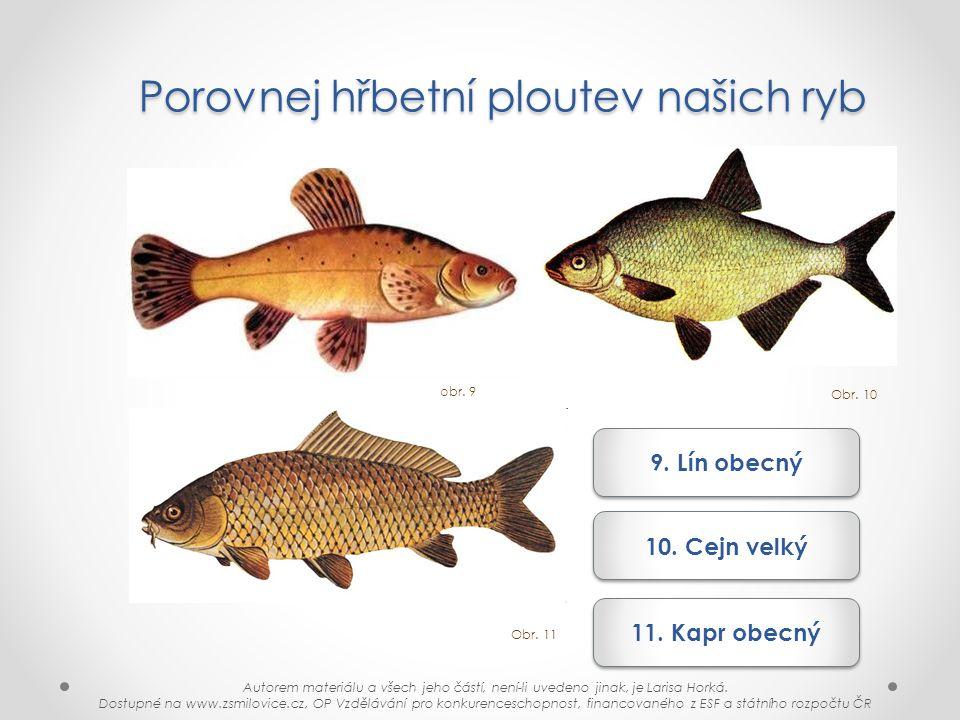 Porovnej hřbetní ploutev našich ryb
