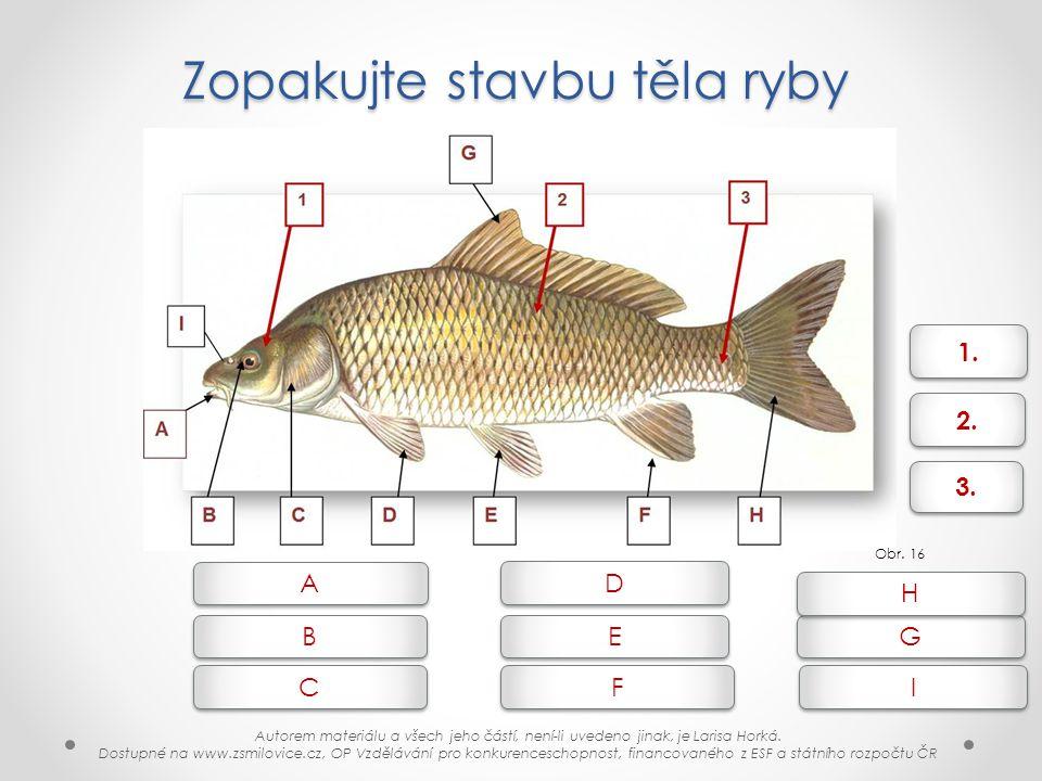 Zopakujte stavbu těla ryby