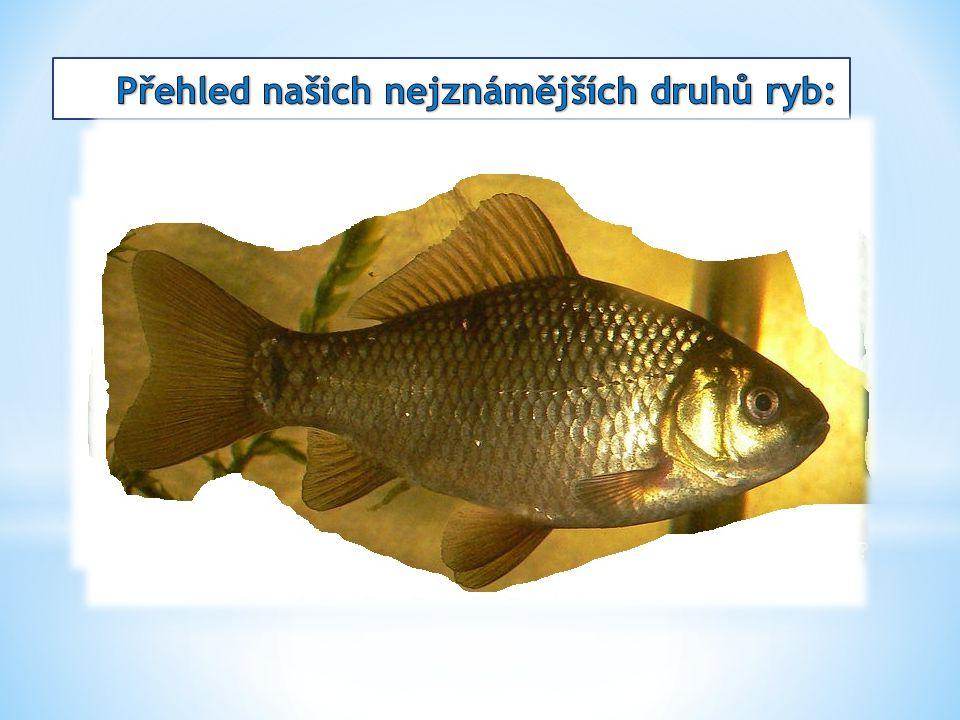 Přehled našich nejznámějších druhů ryb: